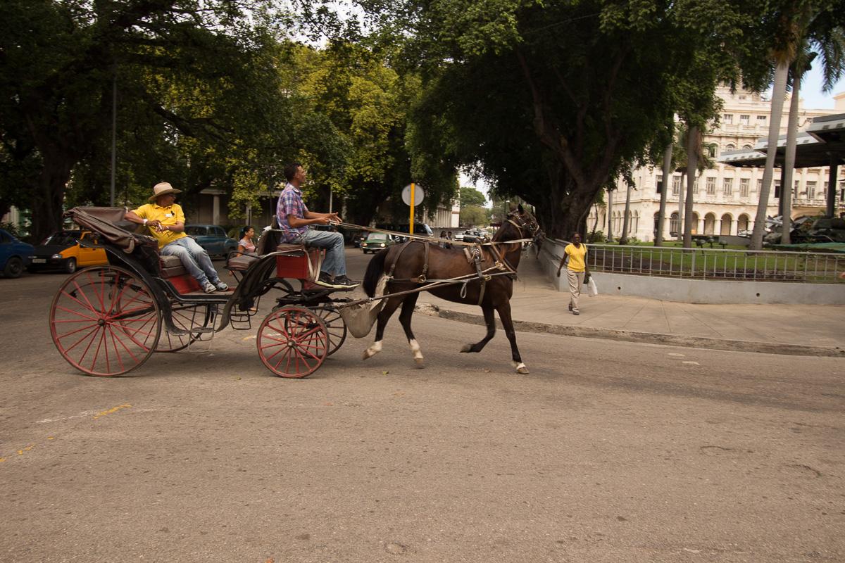 Havana-8633